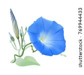 morning glory heavenly blue.... | Shutterstock .eps vector #769944433