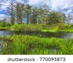 daytime in the swamps of...   Shutterstock . vector #770095873