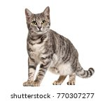 grey stripped mixed breed cat... | Shutterstock . vector #770307277