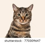 close up on a striped mixed...   Shutterstock . vector #770309647