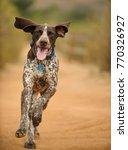 german shorthair pointer dog... | Shutterstock . vector #770326927