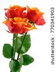 orange roses close up | Shutterstock . vector #770341903