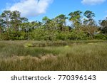 Florida Marshland Background