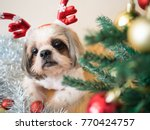 Stock photo cute shih tzu dog in reindeer antlers hat lying down under christmas tree with decorative balls and 770424757