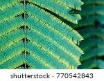 closeup of leaf texture | Shutterstock . vector #770542843