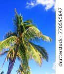 palm tree in a sunny day | Shutterstock . vector #770595847