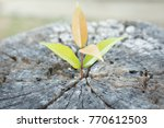 Small photo of new sapling is growing on old wood or tree stump that hade cut already .regeneration and development concept and new generation that happen. side point view