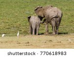 Female Mother Elephant With He...