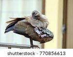 Small photo of A beautiful Hadeda Ibis