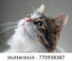 fluffy white with dark spots... | Shutterstock . vector #770938387