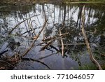 landscape with trees gnawed by...   Shutterstock . vector #771046057
