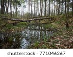 landscape with trees gnawed by...   Shutterstock . vector #771046267