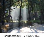 the sunlight beam through the... | Shutterstock . vector #771303463