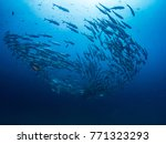 school of fishes with blue... | Shutterstock . vector #771323293