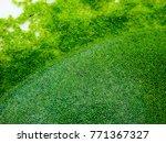 Small photo of Wolffia globosa or Fresh water Alga, Water Meal, Swamp Algae is local food for Thailand.