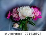 pink  white and purple peony...   Shutterstock . vector #771418927