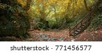 autumn forest in the mountains... | Shutterstock . vector #771456577