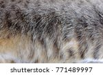 close up fur texture of striped ... | Shutterstock . vector #771489997