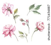 set of flowers roses. hand draw ... | Shutterstock . vector #771656887