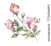 The Image Of A Rose.hand Draw...