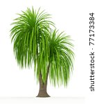 Ponytail Palm Isolated Over...
