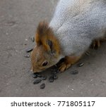 closeup of funny cute grey and... | Shutterstock . vector #771805117