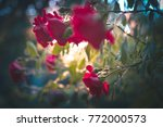 beautiful red roses against... | Shutterstock . vector #772000573