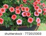 a hanging basket of ... | Shutterstock . vector #772015303