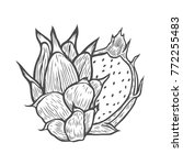 pitaya hand drawn sketch of... | Shutterstock .eps vector #772255483