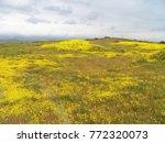 carrizo plain national monument ...   Shutterstock . vector #772320073