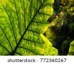 leaves backgrounds wallpaper | Shutterstock . vector #772360267