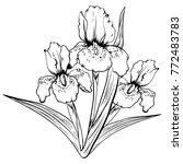 hand drawn iris flower. sketch  ...   Shutterstock .eps vector #772483783