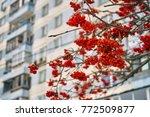 rowan tree near dwelling house ... | Shutterstock . vector #772509877