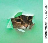 fluffy cute cat peeking out of... | Shutterstock . vector #772564387