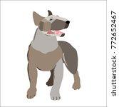 white bull terrier isolated on... | Shutterstock .eps vector #772652467