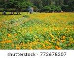 Orange Cosmos Flower Field Tha...