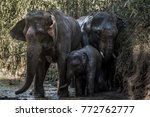Elephant Family Is Playing...