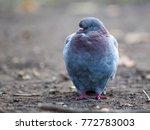 Sad Pigeon With Blurred...