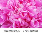 Peony Ultra Violet Flower...
