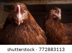 close up portrait of a hen in a ... | Shutterstock . vector #772883113
