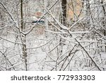 trees in the forest in winter... | Shutterstock . vector #772933303