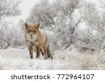 Red Fox In A Winter Landschap ...