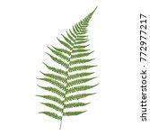 fern leaf. green on a white... | Shutterstock .eps vector #772977217
