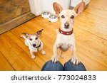 dogs hungry at home | Shutterstock . vector #773024833