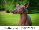 portrait of one dog of... | Shutterstock . vector #773028703