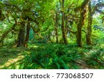 big ferns on hall of mosses... | Shutterstock . vector #773068507