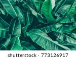 tropical banana leaf texture ... | Shutterstock . vector #773126917