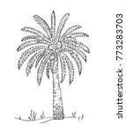 desert. date fruit palm on sand ... | Shutterstock .eps vector #773283703