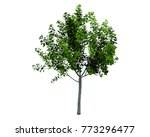 isolated trees on white... | Shutterstock . vector #773296477