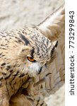 Small photo of Color outdoor wildlife animal portrait of a single isolated owl on natural background, symbolic figurative wise wisdom knowledge know how intelligent idea brilliant outstanding brain knowing